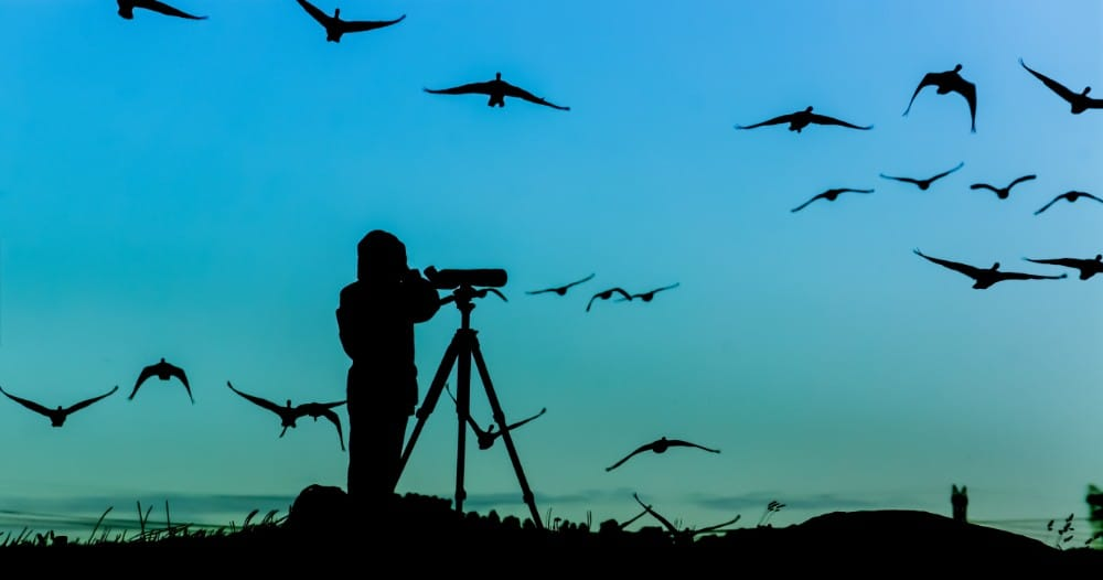 The Mental Health Benefits of Bird Watching May Surprise You